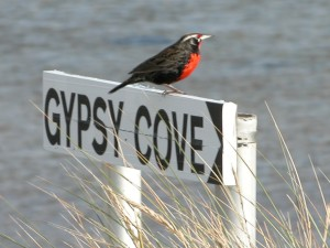 Gypsy Cove and robin 0983.jpg (21674 bytes)