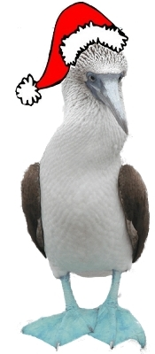 GPS Blue Footed Booby.jpg (42688 bytes)